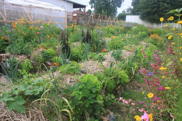 Photos de jardins tirées du site http://www.permaterre.com/