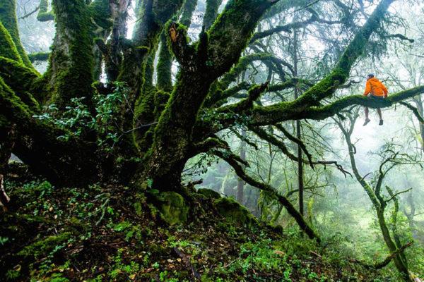 Dossier thématique – Une idée de nature peut en cacher une autre